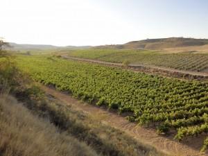 the-vineyard_3